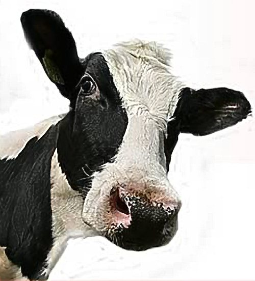 Hoor De Koeien Loeien! Winterjassen -30%